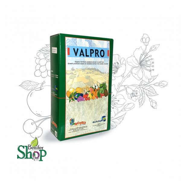 جلبک دریایی valpero