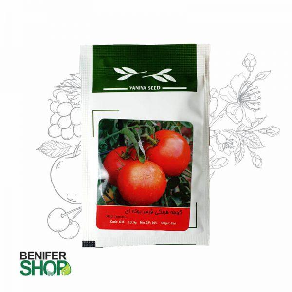 بذر خانگی گوجه قرمز بوته ای