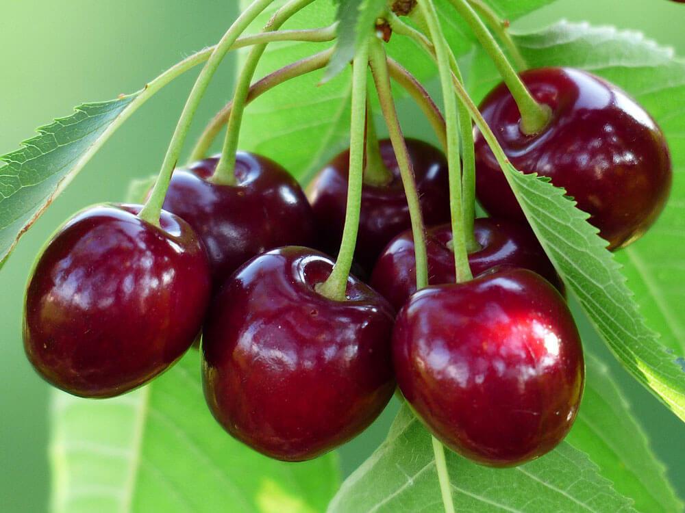 درشت شدن میوه با پتاسیم