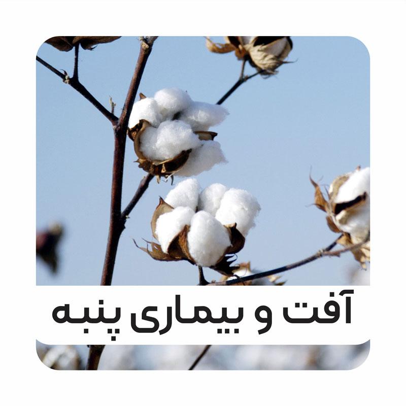 cover-cotton